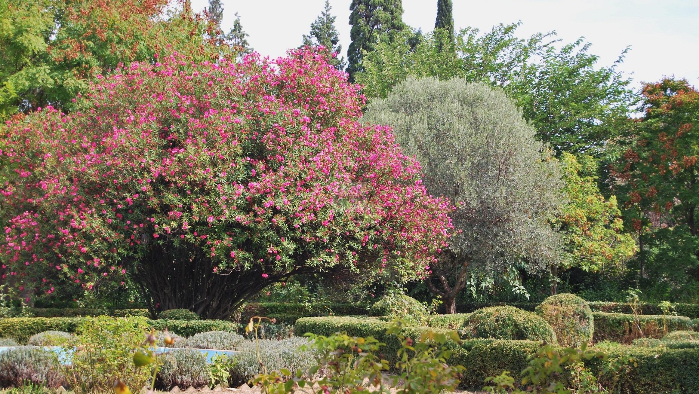 Jardin Italiano con Adelfa